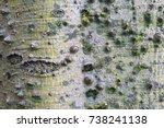 ceiba speciosa detail | Shutterstock . vector #738241138