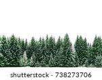 Spruce Tree Forest Covered By...