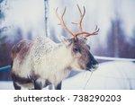 group herd of caribou reindeers ... | Shutterstock . vector #738290203