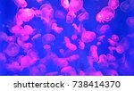 jellyfishes swimming in... | Shutterstock . vector #738414370