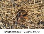 landscapes of marshes  birds... | Shutterstock . vector #738435970