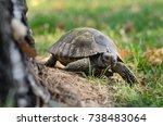 spur thighed tortoise  testudo... | Shutterstock . vector #738483064