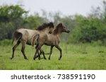 Tinsukia  Assam   Feral Horse...