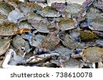 Small photo of Flower crab, Blue crab, Blue swimmer crab, Blue manna crab very fresh