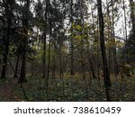 gray forest. dark woods | Shutterstock . vector #738610459