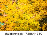 bright yellow maple leaves | Shutterstock . vector #738644350