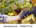 winemaker picking grapes during ... | Shutterstock . vector #738647116
