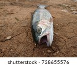 trout laying in dry river bed... | Shutterstock . vector #738655576