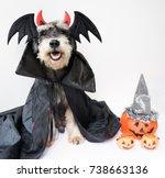 a miniature schnauzer wearing... | Shutterstock . vector #738663136