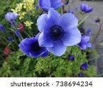 very beautiful purple tulips... | Shutterstock . vector #738694234