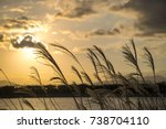 reeds in the golden hour with... | Shutterstock . vector #738704110