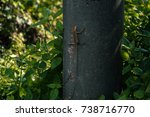 lizard sitting on light pole... | Shutterstock . vector #738716770