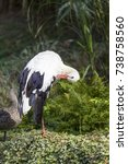 Small photo of White stock preening with a abyssinian blue winged goose