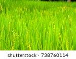 nature green rice landscape...   Shutterstock . vector #738760114