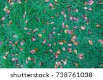 the leaves on the ground | Shutterstock . vector #738761038