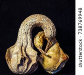 Small photo of Portrait of two old, bird shaped gourds with long necks and beaks, embracing, on black background, suggesting affection
