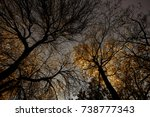 view of beautiful trees in... | Shutterstock . vector #738777343