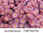 riot of bright autumn flowers | Shutterstock . vector #738790756