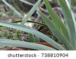 Small photo of A female cat, playing in the garden, behind leaves, ambushing something.