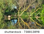 trees reflected into the river... | Shutterstock . vector #738813898
