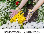 young woman planting flowers in ... | Shutterstock . vector #738823978