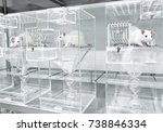 animal experiments for urine... | Shutterstock . vector #738846334