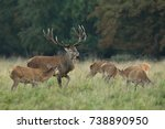 red deer   rutting season | Shutterstock . vector #738890950
