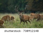 red deer   rutting season | Shutterstock . vector #738912148