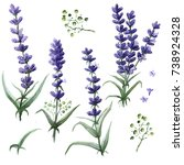 field flower  violet flower ... | Shutterstock . vector #738924328