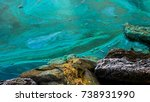 The Cyanobacteria Dies And The...