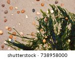 nature still life with... | Shutterstock . vector #738958000
