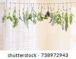fresh flovouring and medicinal... | Shutterstock . vector #738972943
