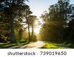 golden gate park sunny scenery... | Shutterstock . vector #739019650