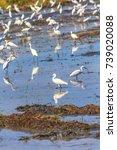 stork is walking on the water...   Shutterstock . vector #739020088