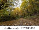 Walking Path In Bulgaria In...