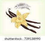 vanilla vector design | Shutterstock .eps vector #739138990