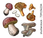 Set Of Edible Mushrooms. A...