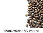 castor beans with copy space | Shutterstock . vector #739190770