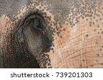 elephants in thailand | Shutterstock . vector #739201303