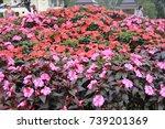 flower | Shutterstock . vector #739201369