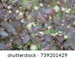 flowers | Shutterstock . vector #739201429