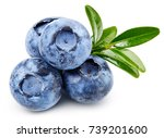 ripe and juicy fresh picked... | Shutterstock . vector #739201600
