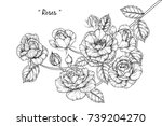 rose flowers drawing with line... | Shutterstock .eps vector #739204270