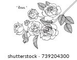 rose flowers drawing with line... | Shutterstock .eps vector #739204300