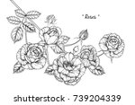rose flowers drawing with line... | Shutterstock .eps vector #739204339