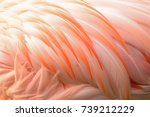 Macro Texture Of Flamingo Bird...