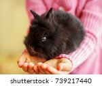 Stock photo ghildren holding cute little fluffy rabbit closeup girl holding a small black rabbit decorative 739217440