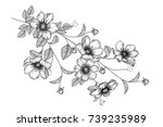 flowers drawing with line art... | Shutterstock .eps vector #739235989