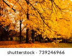 Autumn Landscape Background....
