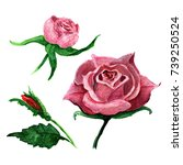 wildflower rose flower in a...   Shutterstock . vector #739250524